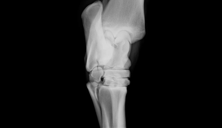 Radiographie numérique - Service aux animaux de la ferme & équins - Hôpital vétérinaire de Sherbrooke