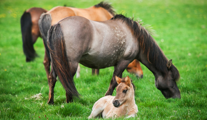Reproduction - Service aux animaux de la ferme & équins - Hôpital vétérinaire de Sherbrooke