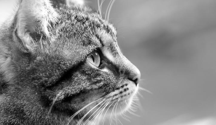 Euthanasie à domicile - Service aux animaux de compagnie - Hôpital vétérinaire de Sherbrooke